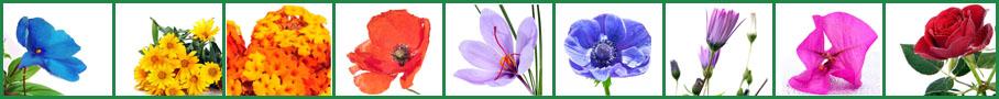 Blumen-Bestseller